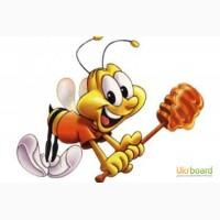 Оптовая закупка мёда
