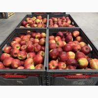 Качественные яблоки оптом от производителя