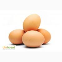 Продам яйце інкубаційне курине Адлер сріблястий