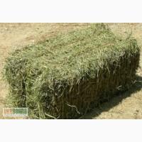 Продам сено луговое в тюках (разнотравье)