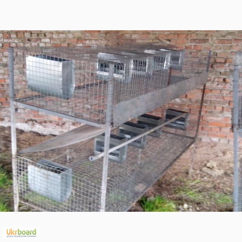 Сухой корм для взрослых кошек породы сфинкс Royal Canin