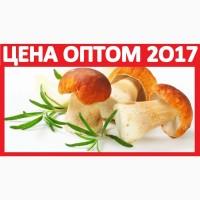 2017 БЕЛЫЕ ГРИБЫ Сушёные Купить Оптом! Продам Грибы Солёные Новосибирск