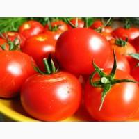 Крупным оптом продам помидор