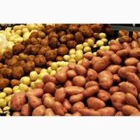 Куплю картофель в больших объемах