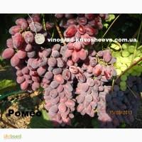 Саженцы винограда Ромео. Большой выбор сортов Павловского, Бурдака, Капелюшного