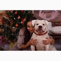 Продаются щенки американского бульдога дата рождения 21 декабря 2017г, Одесса