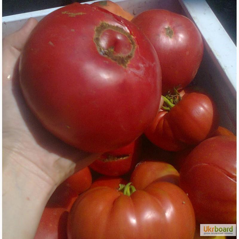Семена томатов в латвии