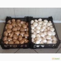 Купим свежие грибы
