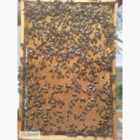 Продам бджолопакети 4 рр. кінець квітня Ціна договірна