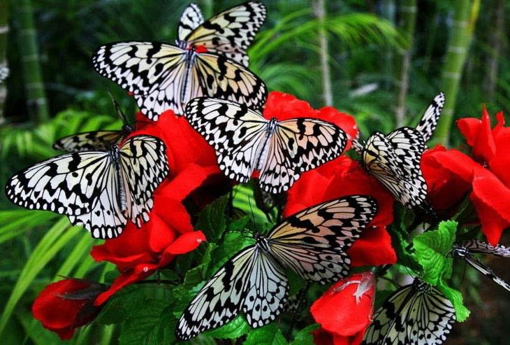 Экзотические Живые Бабочки изТайланда