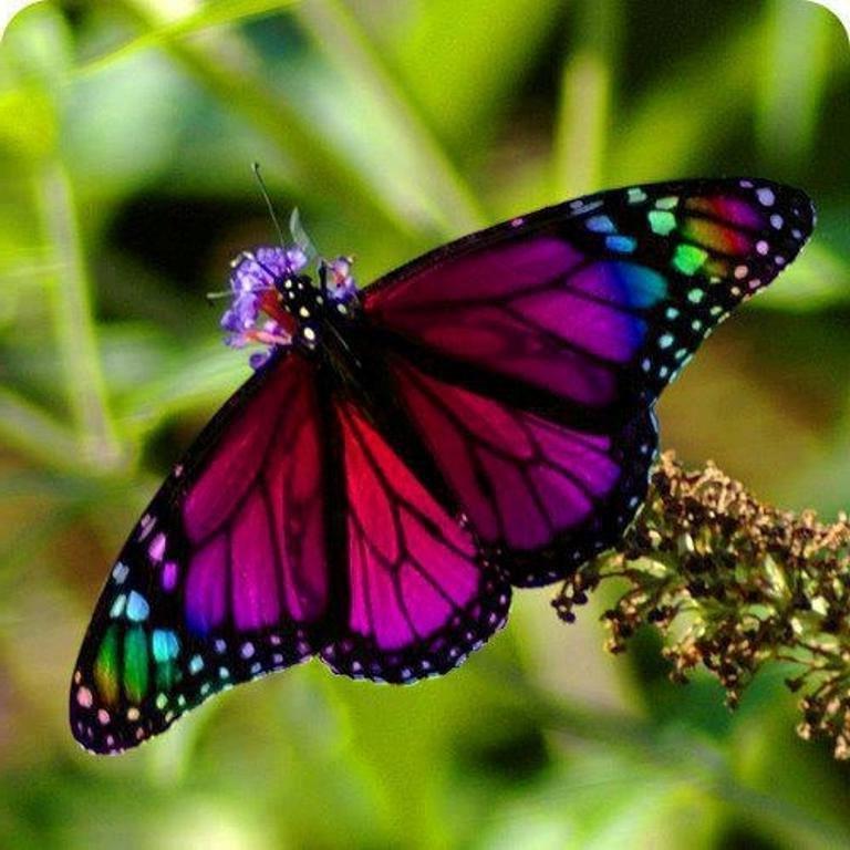 Фото 2. Экзотические Живые Бабочки изТайланда
