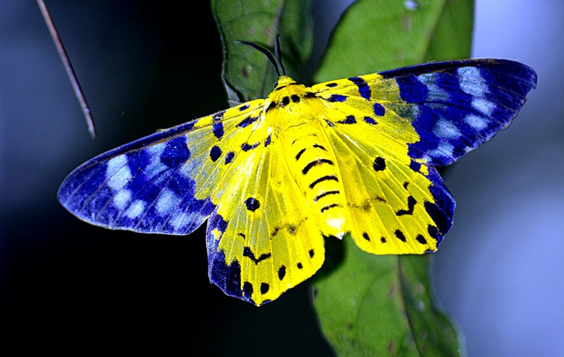 Фото 3. Экзотические Живые Бабочки изТайланда
