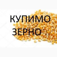 Закуповуємо відходи кукурудзи не кондицію