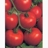 Заключу договор на поставку помидор