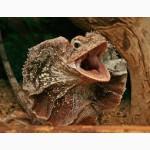 Ящерицы разных видов собственного разведения