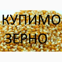 Компанія закуповує дорого кукурудзу подрібнену та відходи кукурудзи