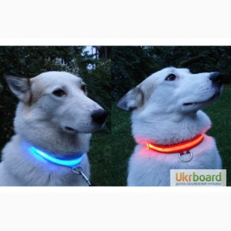 Зонт для собаки, защита от дождя, светящиеся ошейники, LED ошейники, Брелок «Антипотеря»
