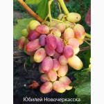 Продам саженцы винограда г.Николаев