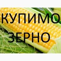 Постійно закупляєм кукурудзу подрібнену (крупку)