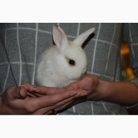 Розпродаж кроликів. Декоративні карликові кролики Акція