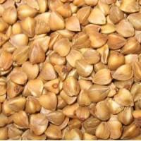 Семена гречихи сорт СЕЛЯНОЧКА элита 1 репрод