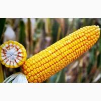 ФАБРІС насіння кукурудзи