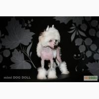 Миниатюрная девочка Китайской хохлатой собачки.