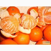 Цитрусовые оптом (мандарин, апельсин)