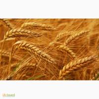Закупаем пшеницу по Луганской области