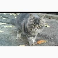 Пропал кот серый