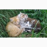 Котята ждут своих хозяевов