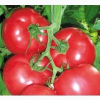 Купить Удобрения и семена овощей 2020,    Агро центр BSProduct Железный Порт