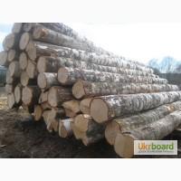 Буковинский лес