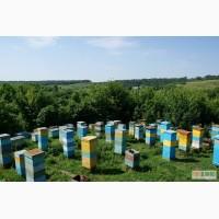 Продам пасеку: отводки, пчелосемьи в Харькове, сушь, ульи