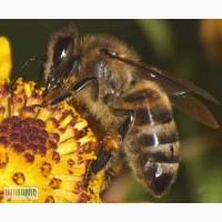 Продам ветпрепарати для бджіл