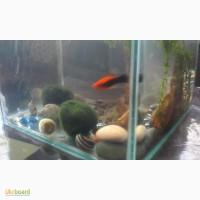 Куплю аквариум на 15 литров