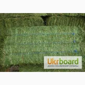 Оптовая продажа сена различных видов с доставкой