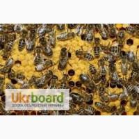 Продаю бджолині пакети
