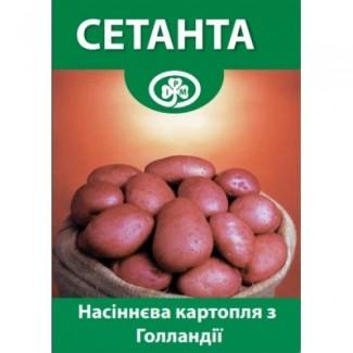 Семенной Картофель Сетанта 1 Репродукция Голландия