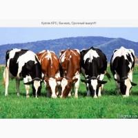 Концентрат для телят, бычков, коров
