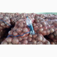 Продам лук сорт халцедон