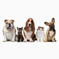 Ветеринарная клика, стрижка животных