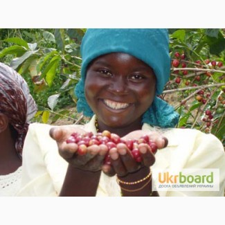 Ароматна натуральна кава 100% Арабіка (Камерун) (зелена та смажена). ОПТОМ