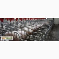 Оборудование для свиноводства, свинарников