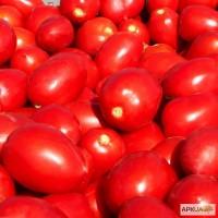 Купить от производителя помидоры