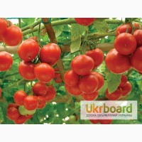 Семена овощей купить в Украине