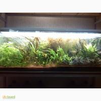 Продам наборы подводных растений для начинающих