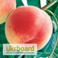 Персик - саженцы персика купить в Киеве с доставкой по Украине g-sad