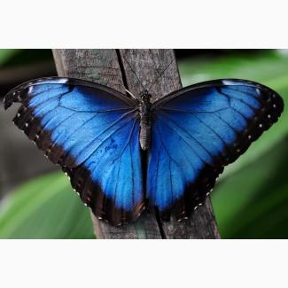 Тропические Живые Бабочки изАмазонки