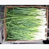 Продам лук зелёный с Доставкой